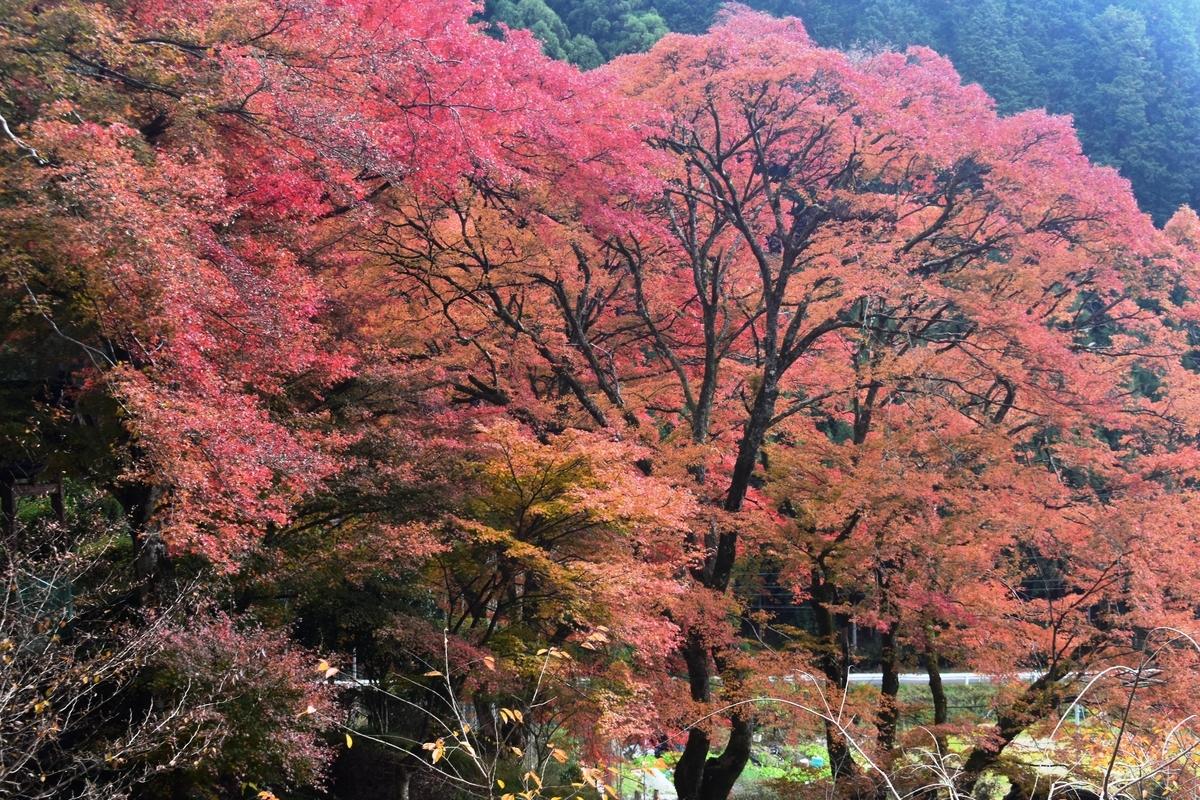龍澤寺の紅葉 見頃 2019年11月24日 撮影:MKタクシー