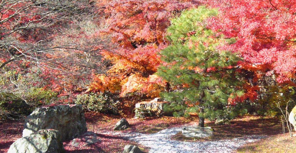 直指庵研修道場の紅葉 見頃過ぎ 2014年11月30日 撮影:MKタクシー