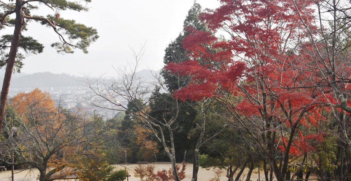 亀山公園の紅葉 見頃 2018年12月1日 撮影:MKタクシー