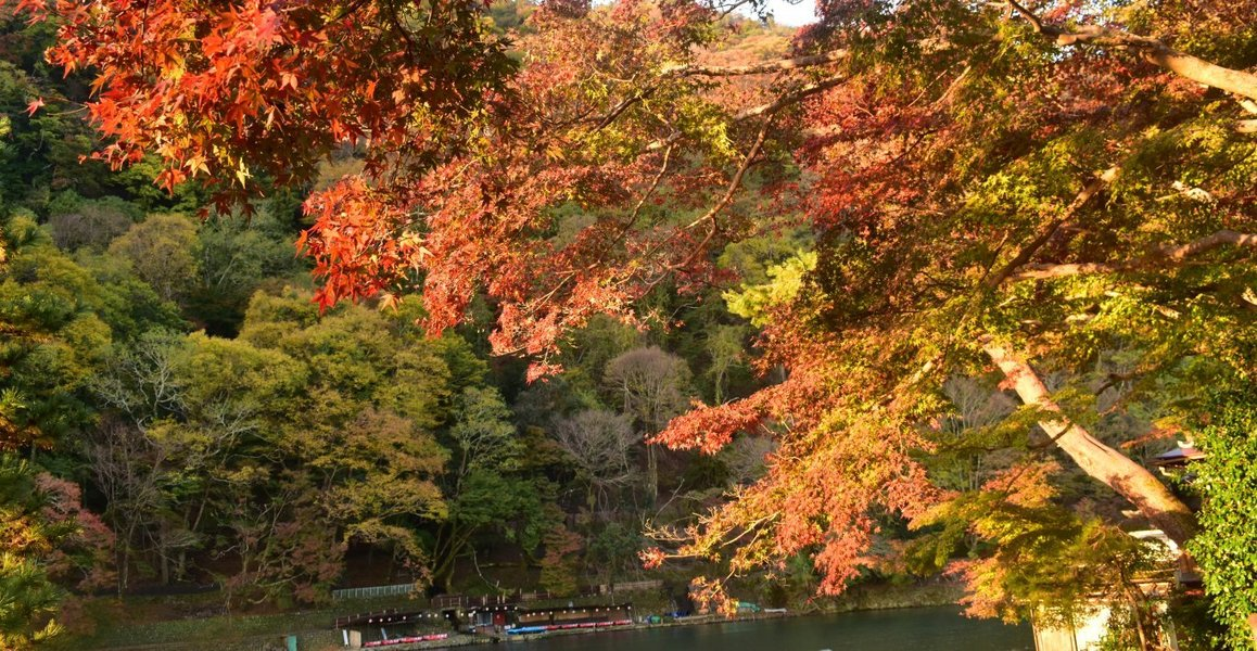 亀山公園の紅葉 見頃 2018年11月20日 撮影:MKタクシー