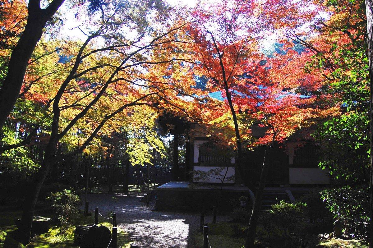 地蔵院の紅葉 見頃 2007年11月25日 撮影:MKタクシー