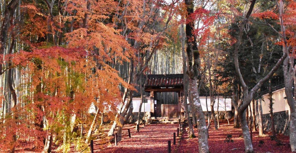 地蔵院・総門の紅葉 見頃 2018年12月8日 撮影:MKタクシー