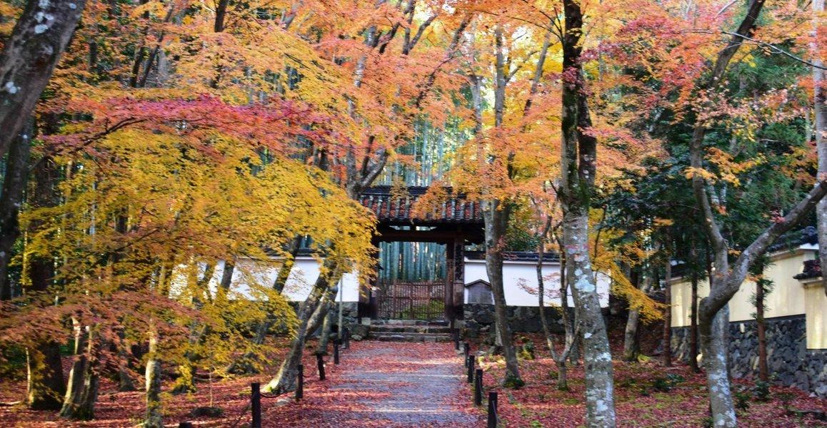 地蔵院・総門の紅葉 散りはじめ 2019年12月14日 撮影:MKタクシー