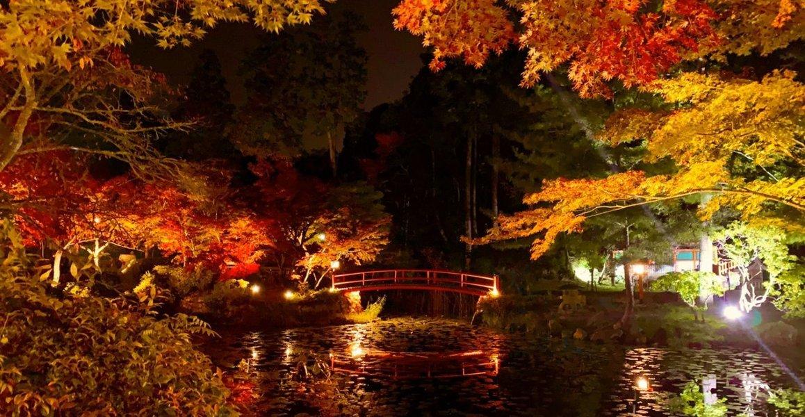 大原野神社・鯉沢池の紅葉ライトアップ 見頃 2019年11月16日 撮影:MKタクシー