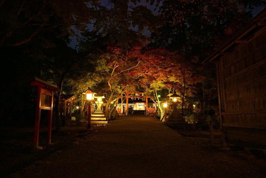 大原野神社の紅葉ライトアップ近し 見頃 2019年11月13日 撮影:MKタクシー
