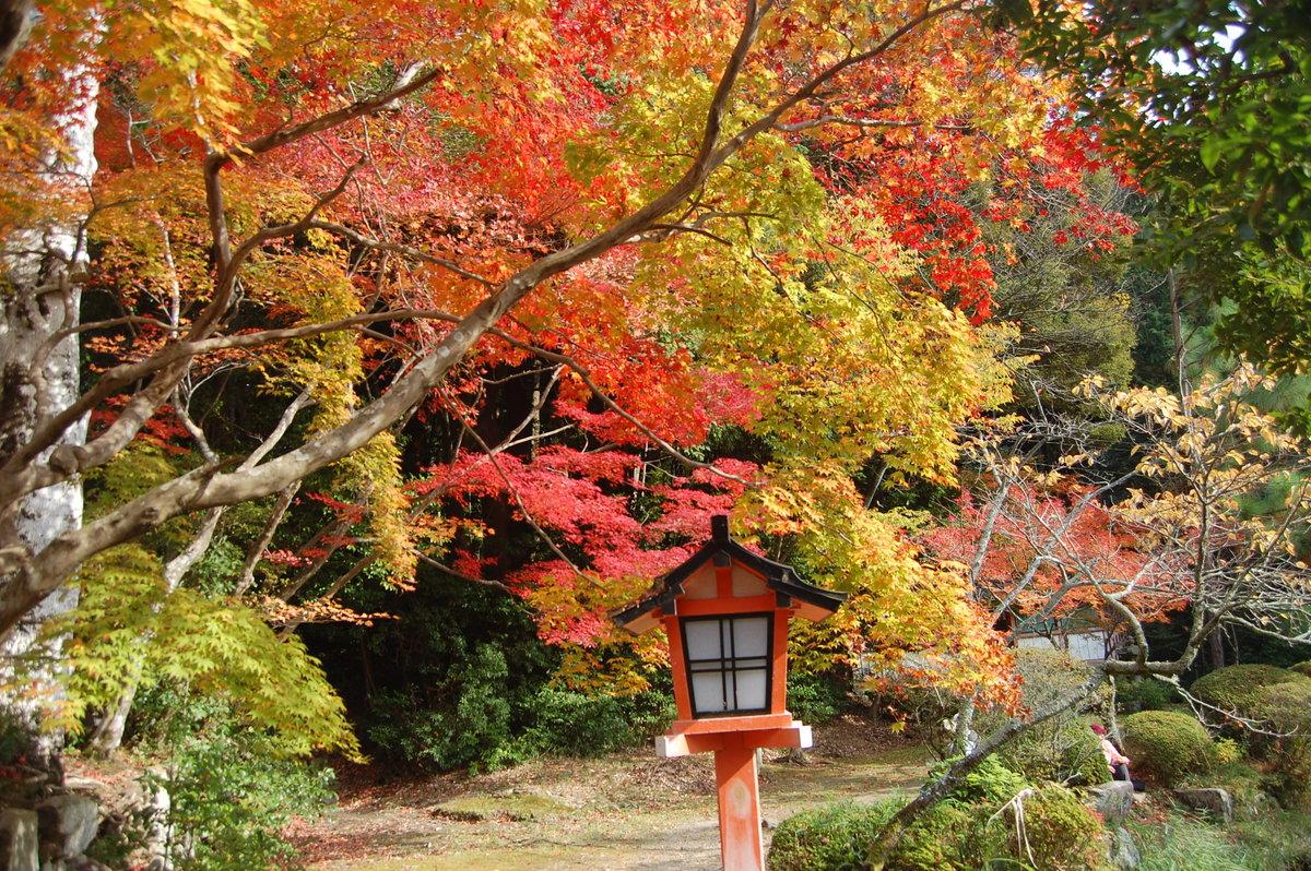大原野神社の紅葉 見頃 2008年11月23日 撮影:MKタクシー
