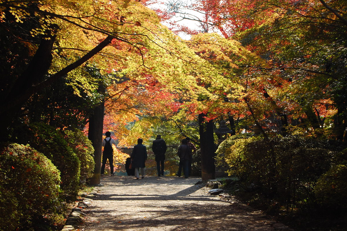 大原野神社の紅葉 見頃 2007年11月28日 撮影:MKタクシー