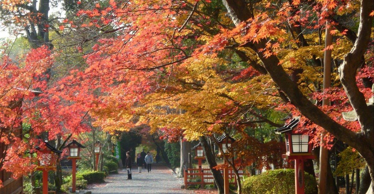 大原野神社の紅葉 見頃 2010年11月28日 撮影:MKタクシー