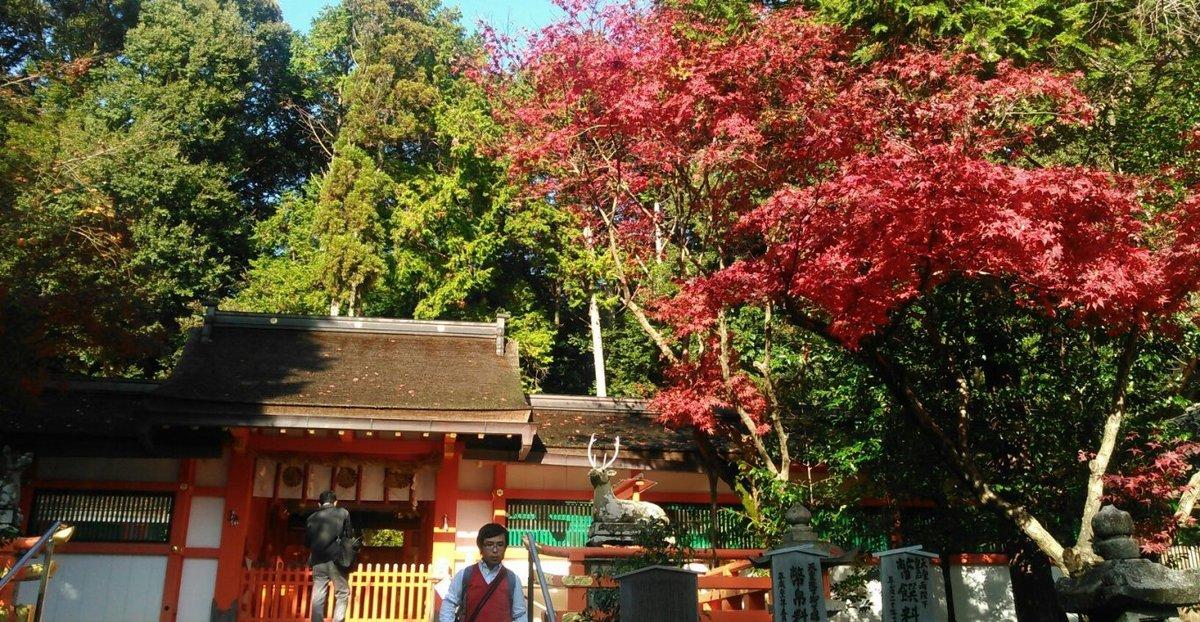 大原野神社の紅葉 見頃 2014年11月30日 撮影:MKタクシー