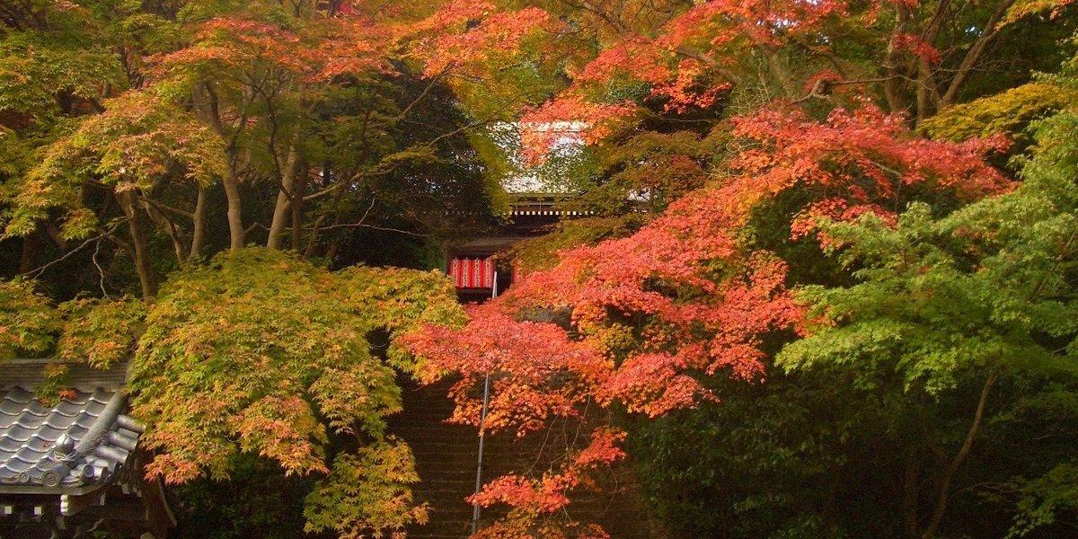 金蔵寺の紅葉 見頃 2008年11月15日 撮影:MKタクシー