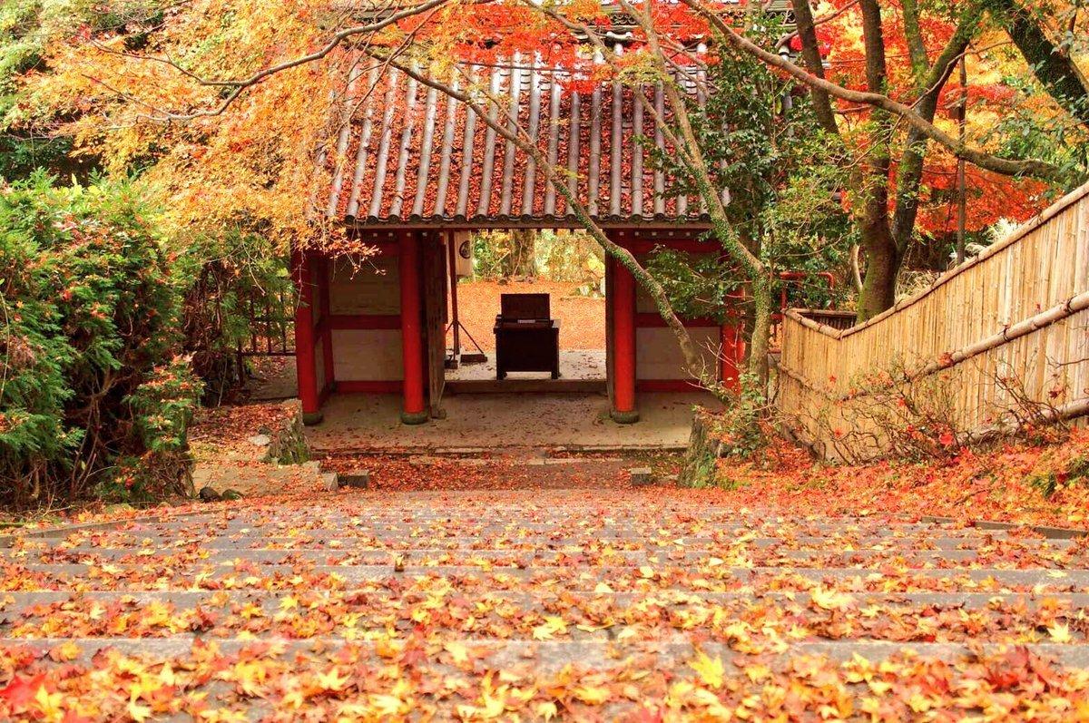 金蔵寺の紅葉 見頃 2016年11月21日 撮影:MKタクシー