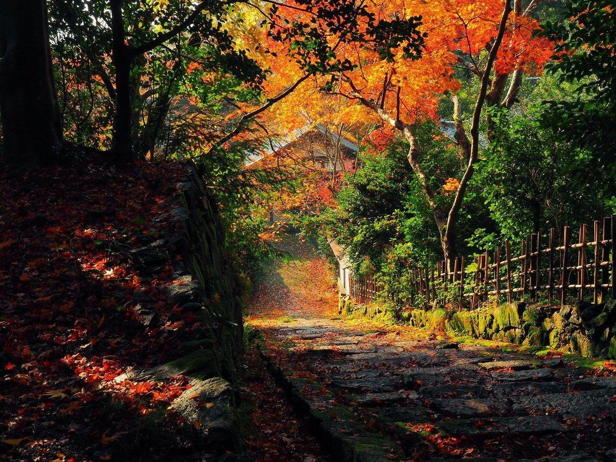 金蔵寺の紅葉 見頃 2017年11月23日 撮影:MKタクシー