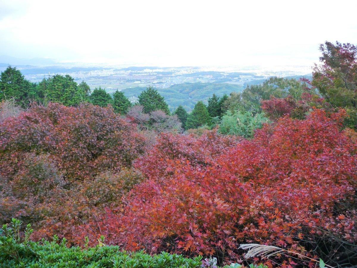 三鈷寺の紅葉 見頃 2009年11月21日 撮影:MKタクシー