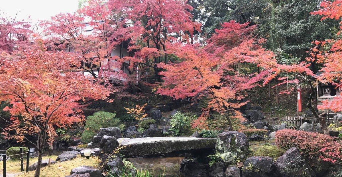 長岡天満宮・錦景苑の紅葉ライトアップ 見頃 2016年11月20日 撮影:MKタクシー