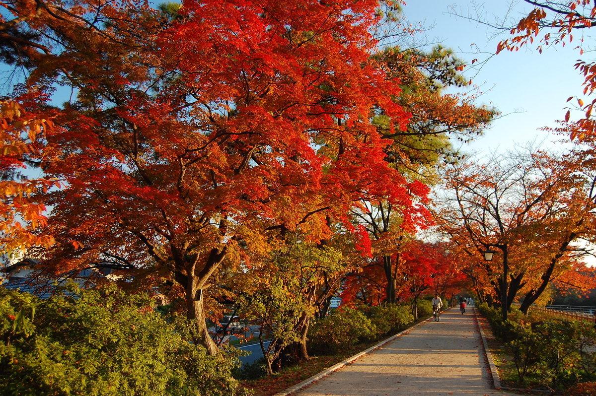 八条ヶ池の紅葉 見頃 2007年11月25日 撮影:MKタクシー