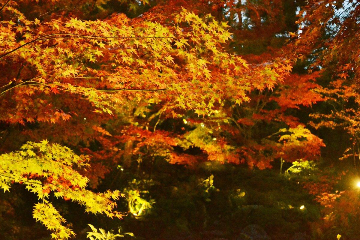 長岡天満宮・錦景苑の紅葉ライトアップ 見頃 2017年11月18日 撮影:MKタクシー