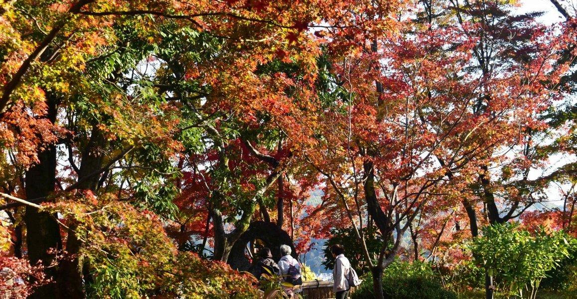 大山崎山荘美術館の紅葉 見頃 2019年12月1日 撮影:MKタクシー