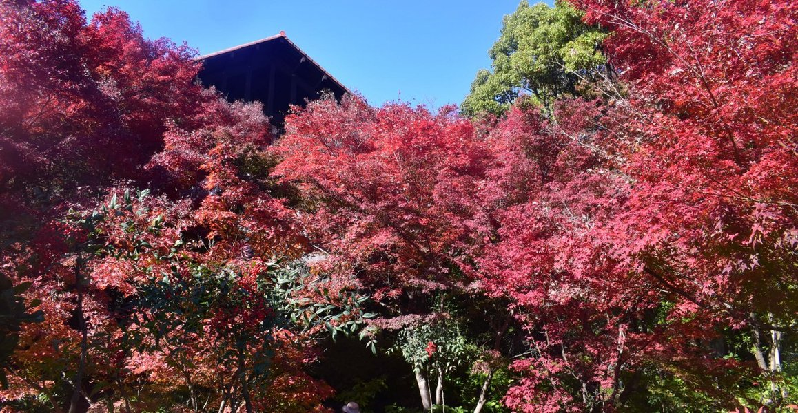 大山崎山荘美術館の紅葉 見頃 2019年11月23日 撮影:MKタクシー