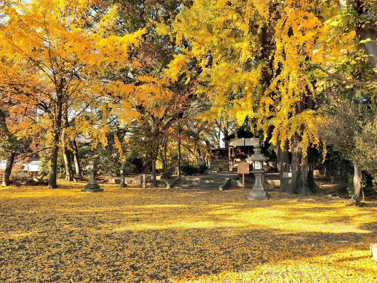 三栖神社の黄葉 見頃 2017年12月3日 撮影:MKタクシー