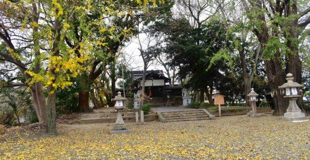 三栖神社の黄葉 終わり近し 2019年12月9日 撮影:MKタクシー