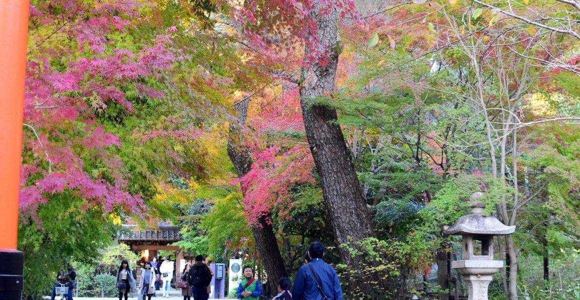 宇治上神社参道の紅葉 見頃近し 2018年11月24日 撮影:MKタクシー