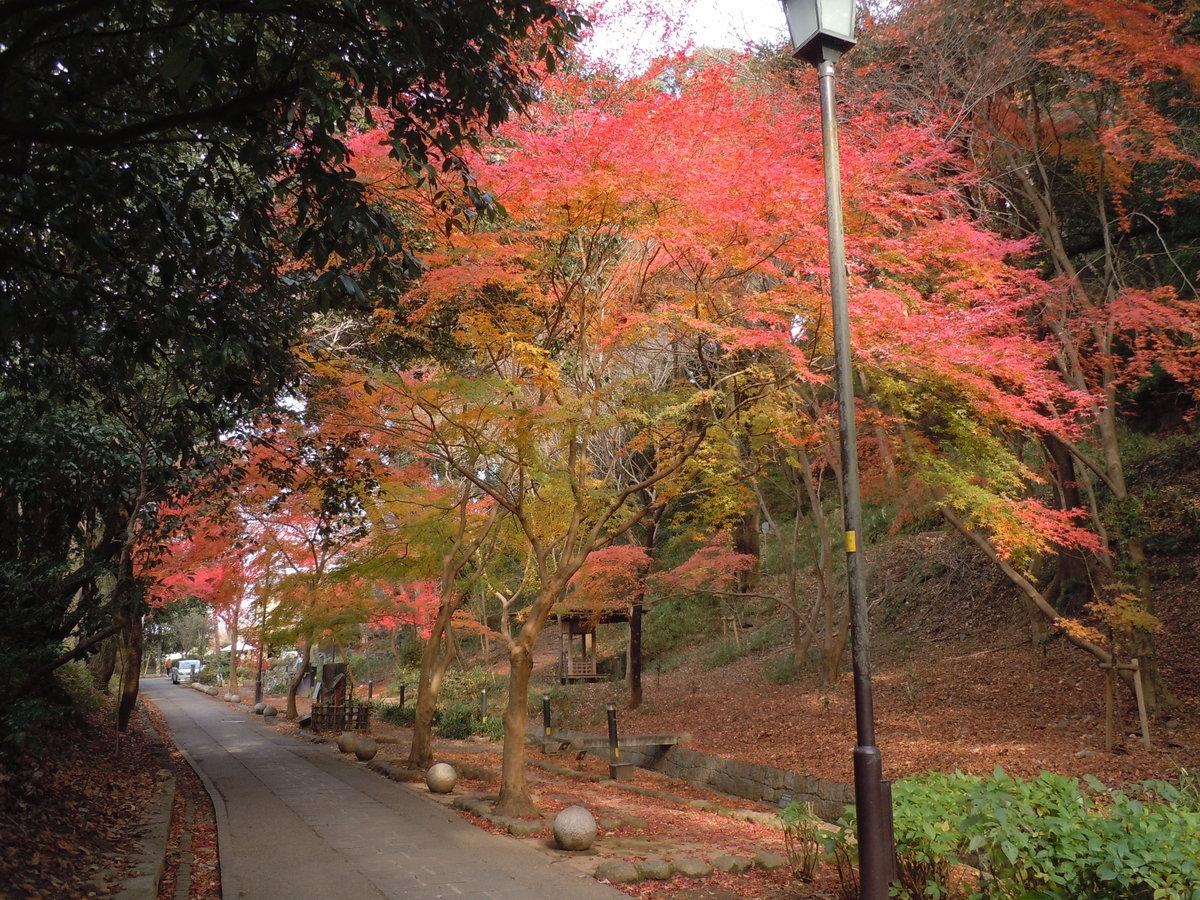 さわらびの道の紅葉 散りはじめ 2010年12月19日 撮影:MKタクシー