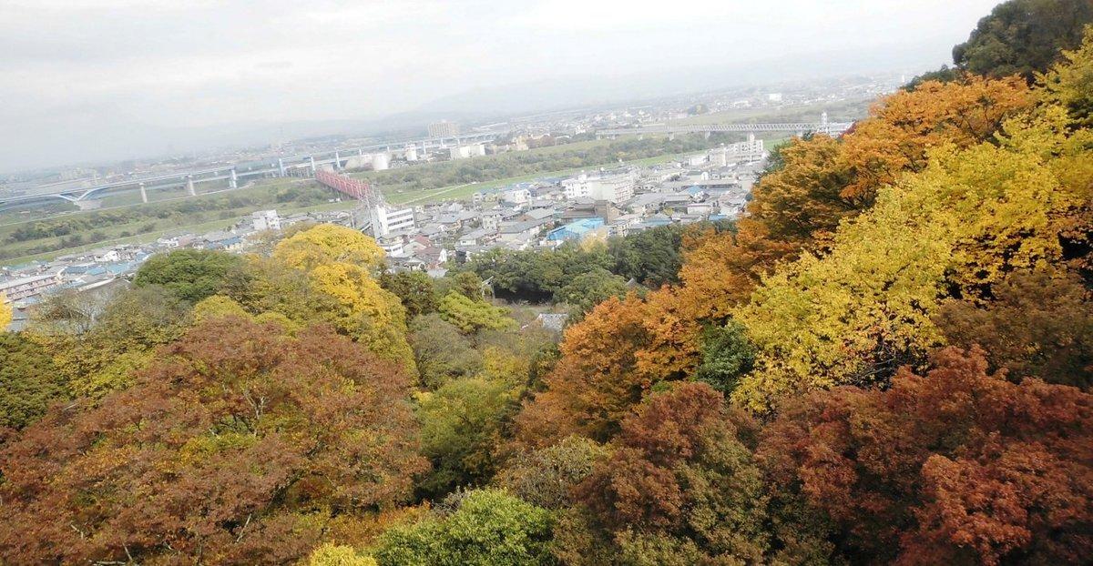 石清水八幡宮参道ケーブルの車内からの紅葉 見頃 2016年11月20日 撮影:MKタクシー