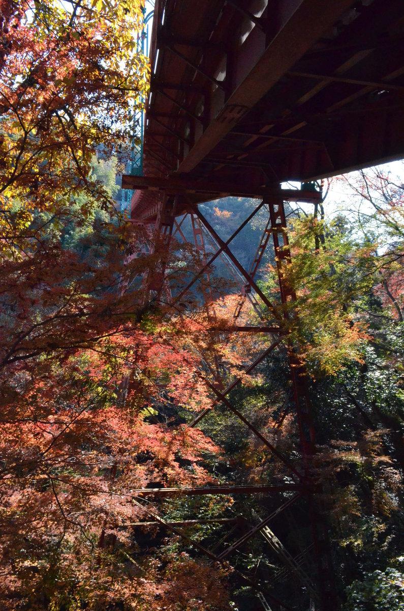 石清水八幡宮参道ケーブル・トレッスル橋の紅葉 見頃 2017年12月3日 撮影:MKタクシー