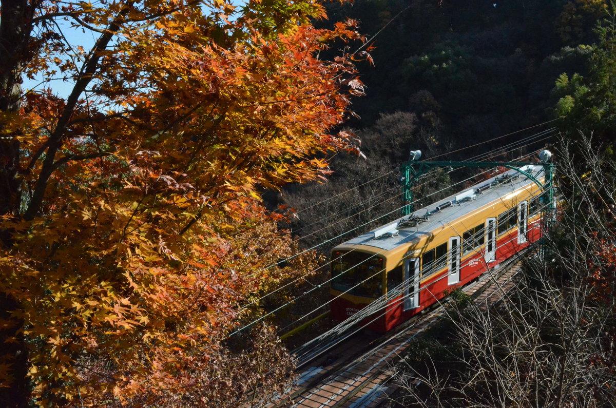神応寺からの石清水八幡宮参道ケーブルの紅葉 見頃 2018年11月24日 撮影:MKタクシー