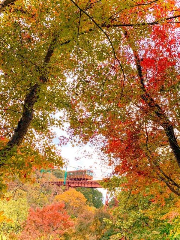 神応寺からの石清水八幡宮参道ケーブルの紅葉 見頃 2019年11月26日 撮影:MKタクシー