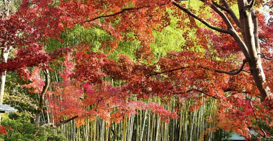 松花堂庭園・外園の紅葉 見頃 2018年12月1日 撮影:MKタクシー