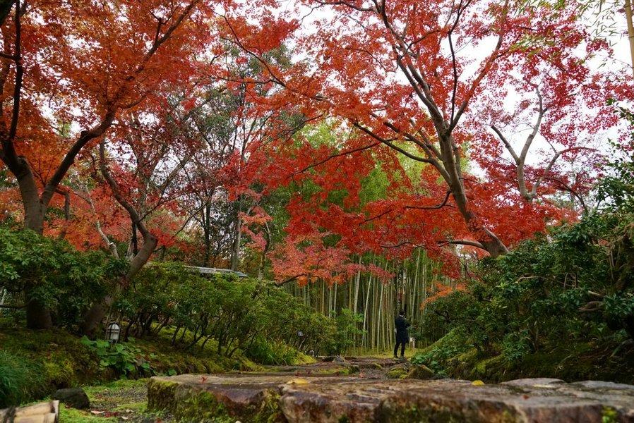 松花堂庭園・外園の紅葉 見頃 2018年12月4日 撮影:MKタクシー