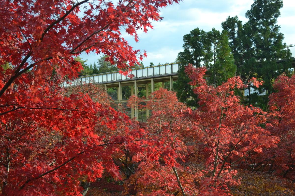 けいはんな記念公園の紅葉 見頃 2017年11月19日 撮影:MKタクシー