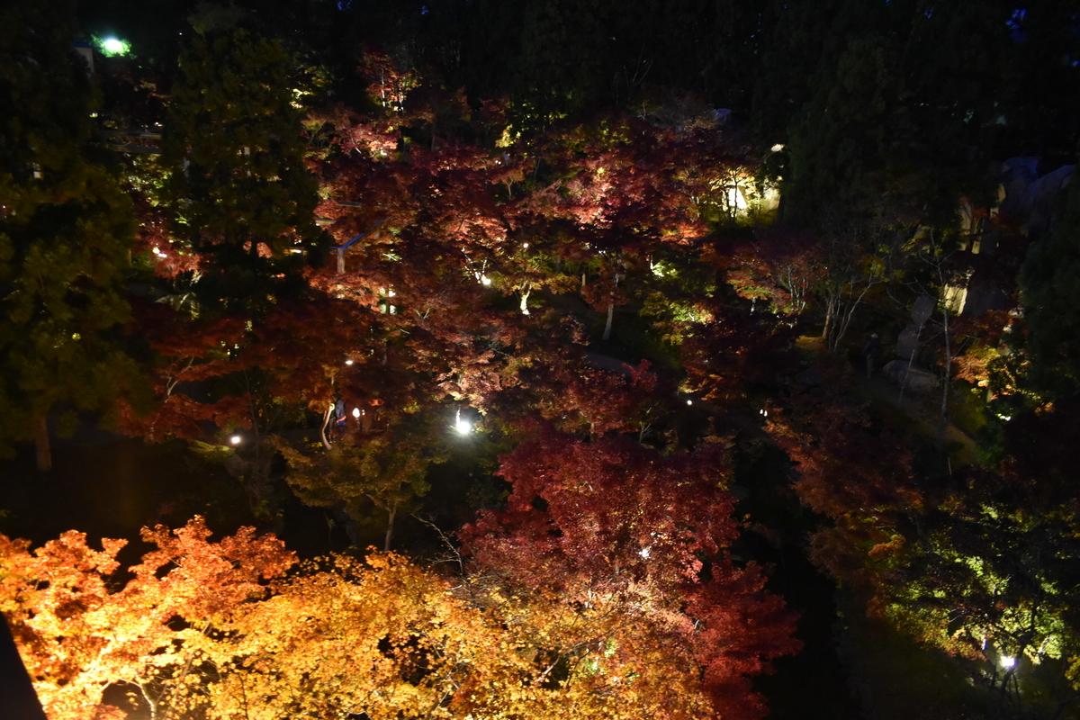 けいはんな記念公園の紅葉ライトアップ 見頃 2019年11月17日 撮影:MKタクシー