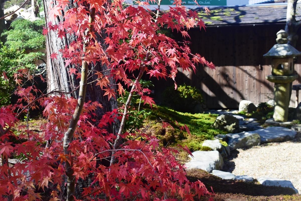正寿院・本堂前の紅葉 見頃 2019年11月17日 撮影:MKタクシー