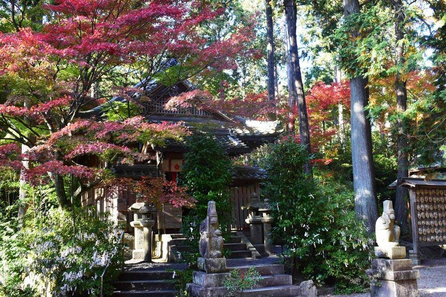 猿丸神社の紅葉 見頃 2018年11月11日 撮影:MKタクシー
