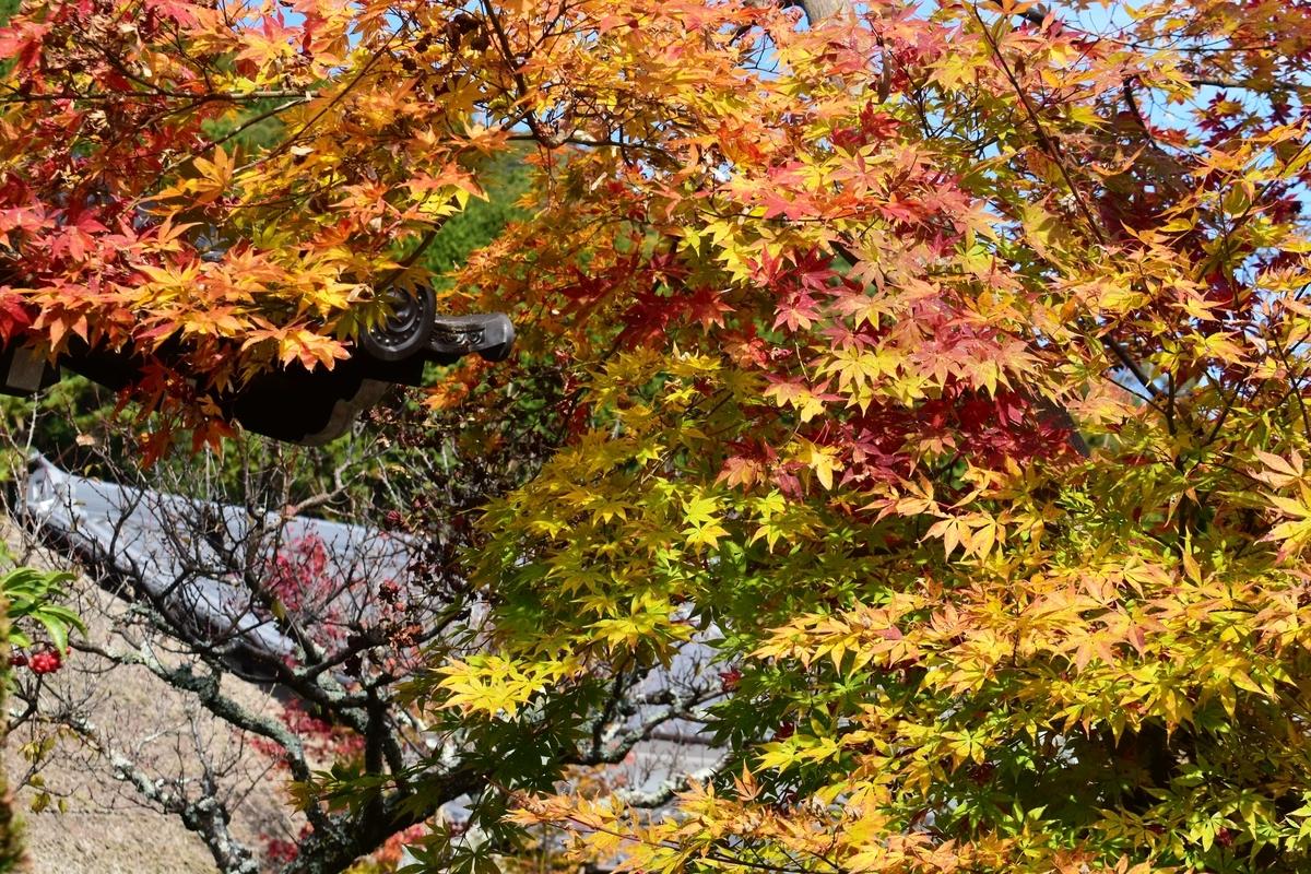 禅定寺の紅葉 見頃 2019年11月17日 撮影:MKタクシー