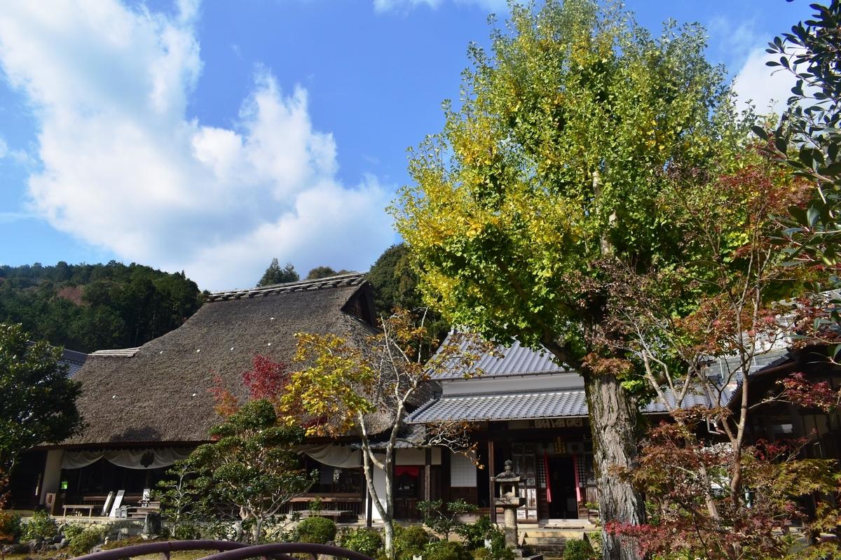 禅定寺の黄葉 見頃近し 2019年11月17日 撮影:MKタクシー