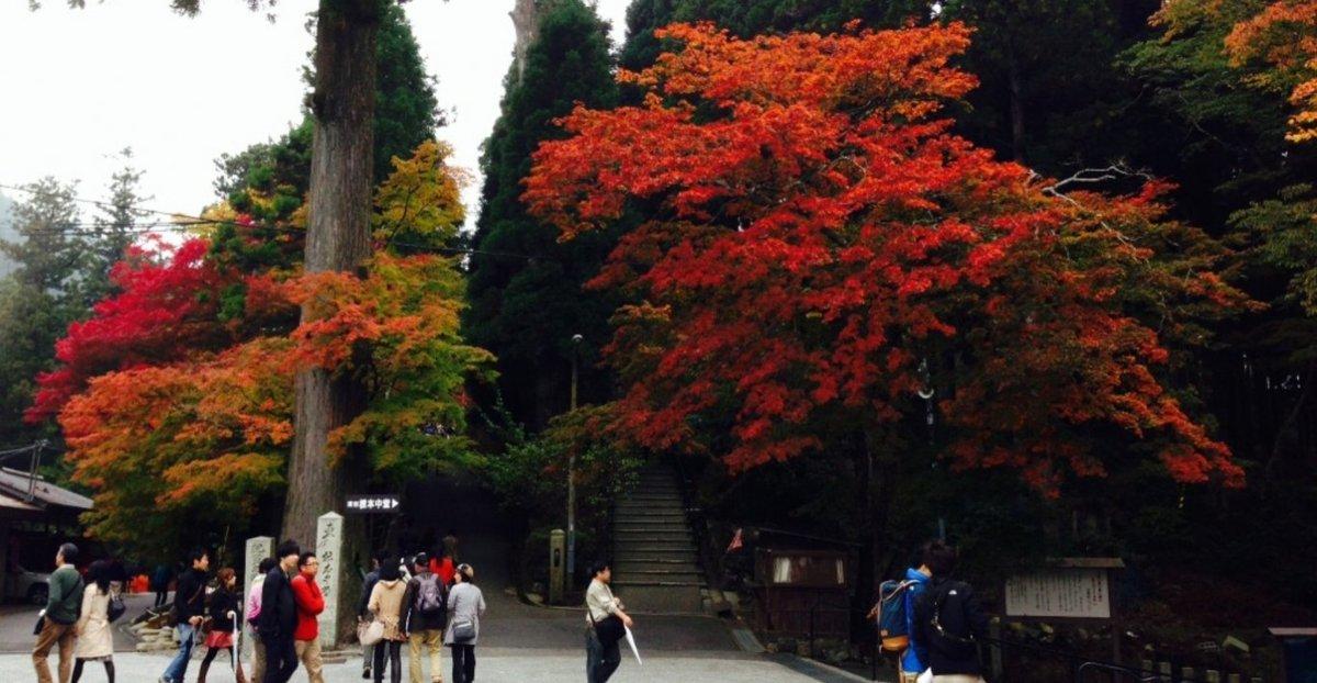 根本中堂前の紅葉 見頃 2013年11月3日 撮影:MKタクシー