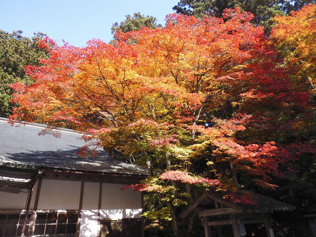 元山大師堂(横川)の紅葉 見頃 2016年11月12日 撮影:MKタクシー