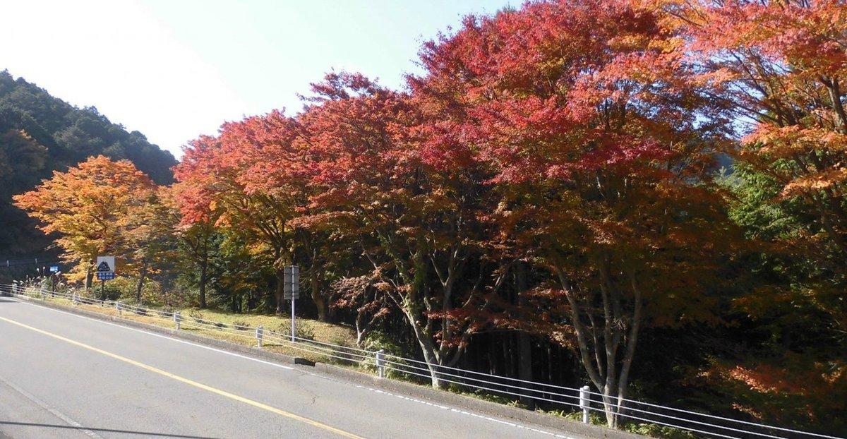 奥比叡ドライブウェイの紅葉 見頃 2016年11月12日 撮影:MKタクシー