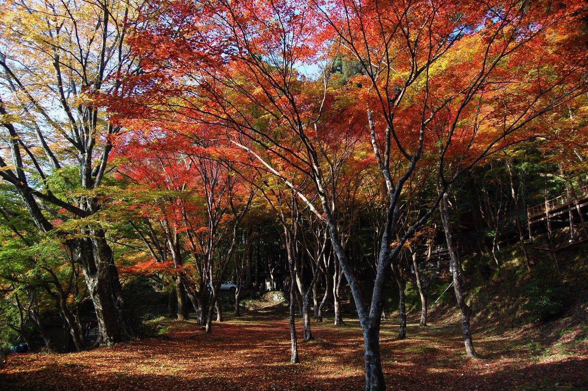 神護寺・石段の紅葉 見頃 2007年11月15日 撮影:MKタクシー