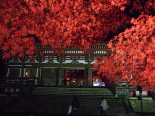 神護寺・金堂の紅葉ライトアップ 見頃 2012年11月19日 撮影:MKタクシー