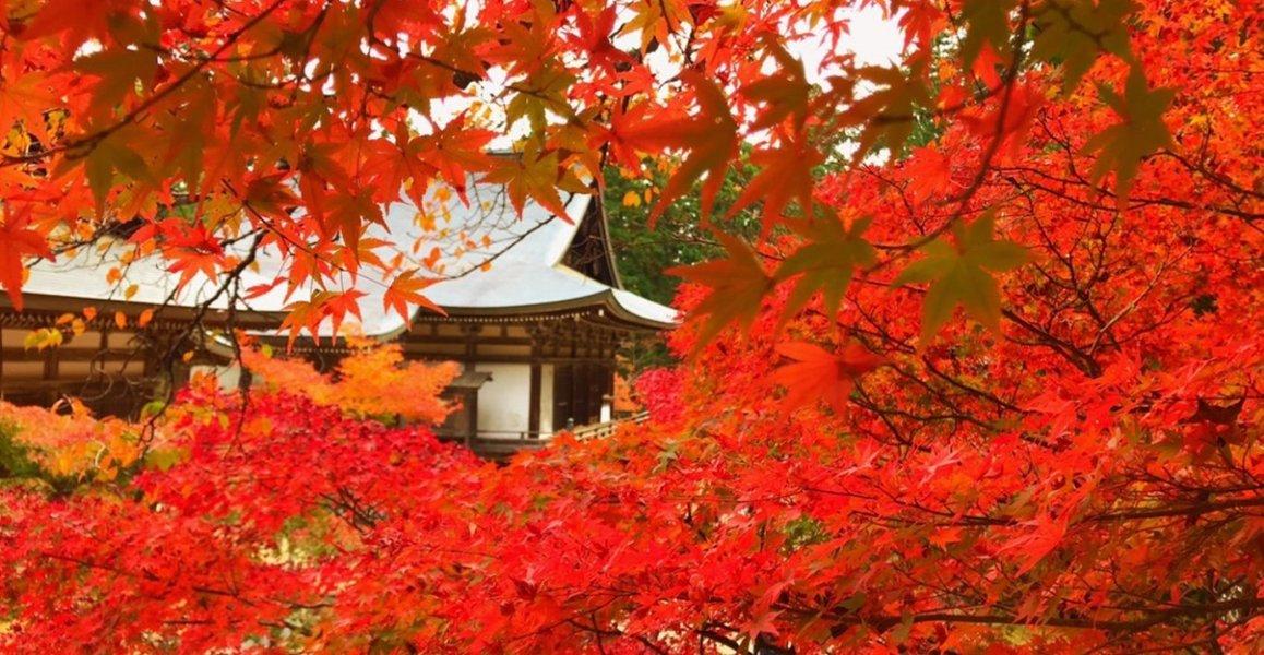 神護寺の紅葉 見頃 2018年11月13日 撮影:MKタクシー