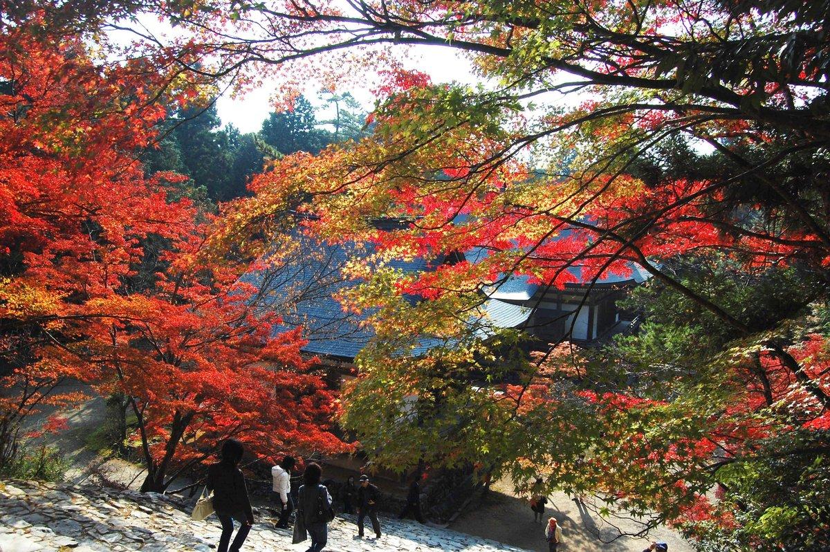 神護寺・金堂前の紅葉 見頃 2007年11月15日 撮影:MKタクシー