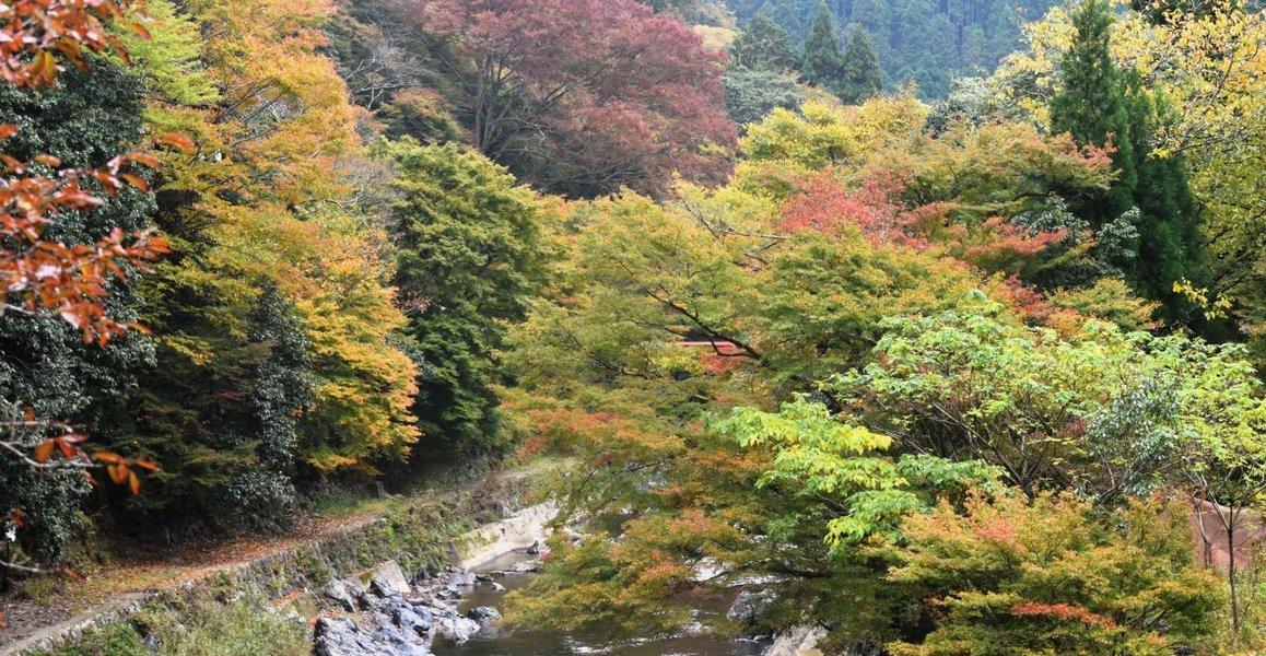清滝・金鈴橋の紅葉 見頃 2018年11月14日 撮影:MKタクシー
