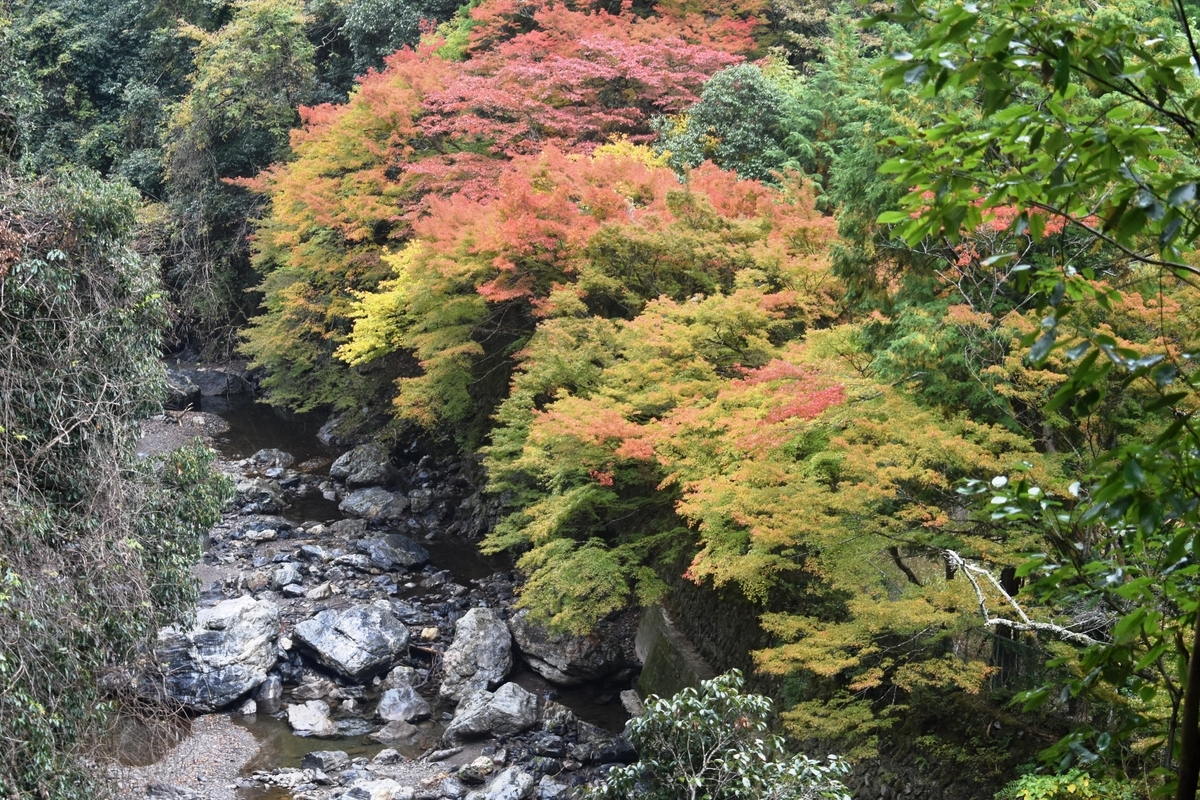 清滝・錦雲渓の紅葉 見頃 2018年11月4日 撮影:MKタクシー