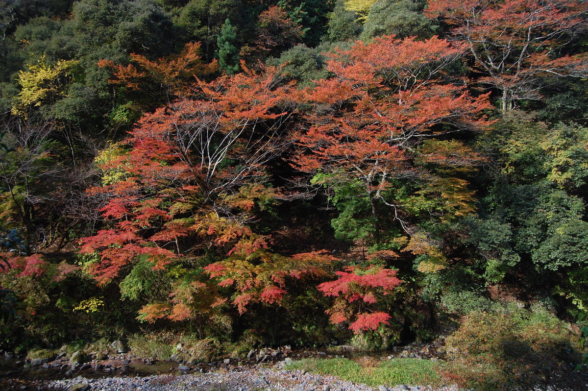 清滝・金鈴峡の紅葉 見頃 2007年11月15日 撮影:MKタクシー