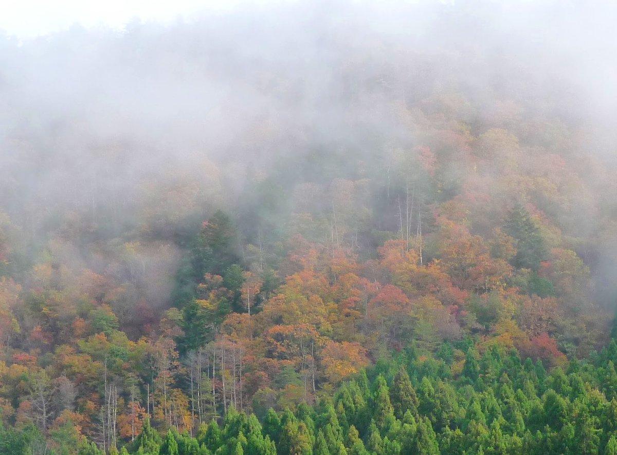美山の山々の紅葉と朝霧 見頃 2009年11月15日 撮影:MKタクシー