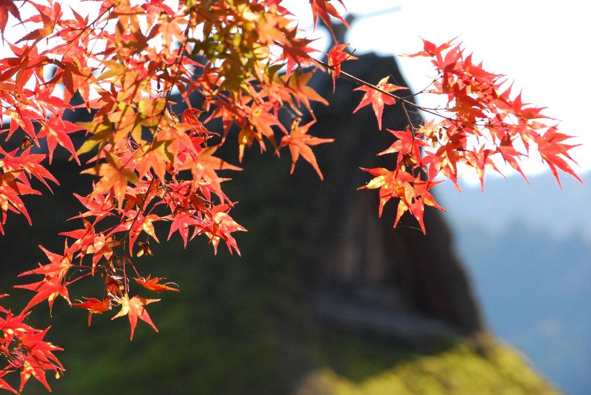 美山かやぶきの里の紅葉 見頃 2014年11月22日 撮影:MKタクシー